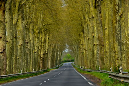 Trees forming a big arch, near Niort, France