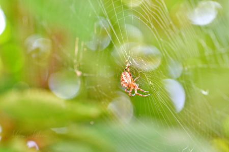 Spider on it's web, in a green bokeh background